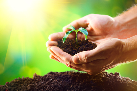 Photo pour Man's hands planting the seedlings into the soil over nature green sunny background - image libre de droit