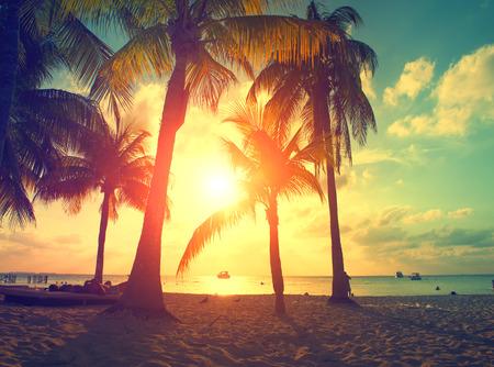 Foto de Sunset beach with palm trees and beautiful sky. Paradise scene of Caribbean Island - Imagen libre de derechos