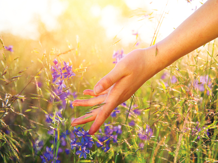 Photo pour Woman hand touching wild flowers closeup. Healthcare concept - image libre de droit