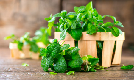 Foto de Mint. Bunch of fresh green organic mint leaf on wooden table closeup - Imagen libre de derechos