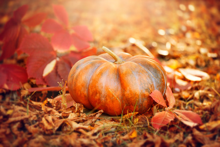 Photo for Halloween pumpkin. Thanksgiving day background. Orange pumpkin over bright autumnal nature background - Royalty Free Image