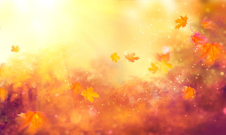Foto de Fall background. Autumn colorful leaves and sun flares - Imagen libre de derechos