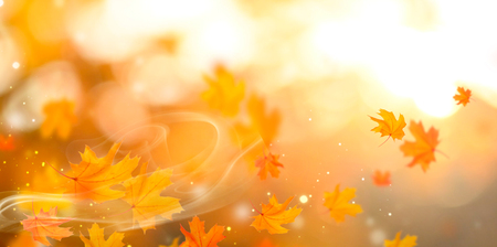 Foto per Autumn backdrop. Person holding autumn leaf with sun beam over blurred autumn background - Immagine Royalty Free