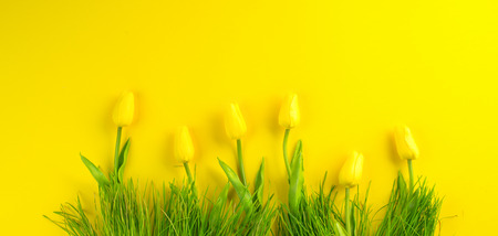 Photo pour Easter background. Bright yellow spring blooming tulip flowers and fresh grass over yellow background. Easter backdrop - image libre de droit