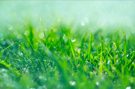 Photo pour Grass with rain drops. Watering lawn. Rain. Blurred green grass background with water drops closeup. Nature. Environment concept - image libre de droit