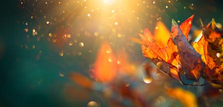 Foto de Autumn colorful bright leaves swinging in a tree in autumnal park. Autumn colorful background, fall backdrop - Imagen libre de derechos