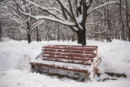 Photo for On a pensive tranquil winter day the snowy city park is full of mysterious charm and looks like a Snow Queen`s estate. - Royalty Free Image