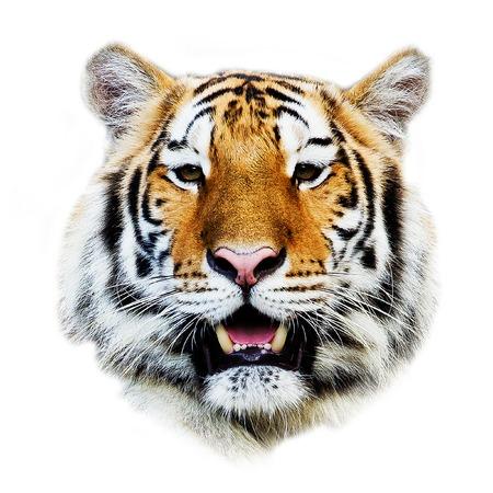 Photo pour tiger - image libre de droit