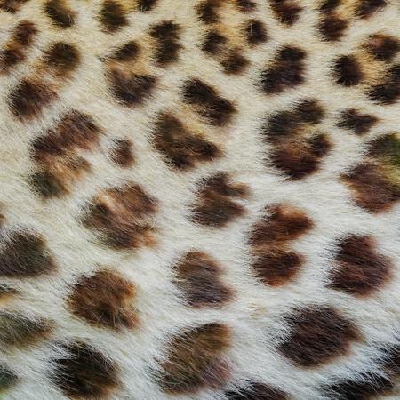 Photo for Jaguar, leopard and ocelot skin texture. - Royalty Free Image