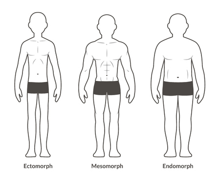 Illustration for Male body types: Ectomorph, Mesomorph and Endomorph. Skinny, muscular and fat physique. - Royalty Free Image