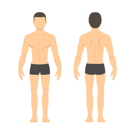 Photo pour Athletic male body chart. Muscular man body from front and back. Isolated health and fitness illustration. - image libre de droit