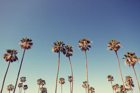 Photo pour California palm trees in vintage style. - image libre de droit
