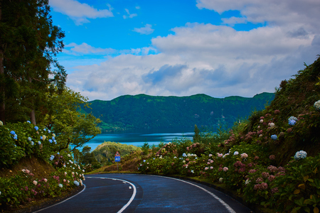 Photo for road on the Azores on Sao Miguel with the vegetation of flowers like hydrangeas - Royalty Free Image