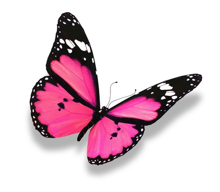 Photo for Pink butterfly, isolated on white - Royalty Free Image