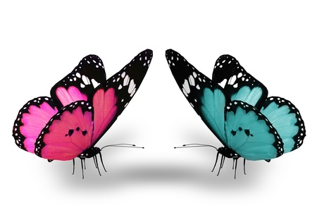 Photo for Pink and blue butterfly, isolated on white - Royalty Free Image