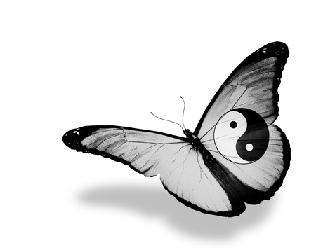 Photo for Dao butterfly flying, isolated on white background - Royalty Free Image