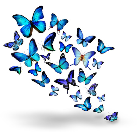 Photo pour Many blue different butterflies flying - image libre de droit