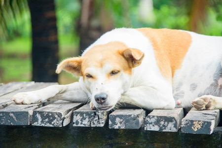 cute dog feeling sleepy with vintage tone. subject is blurred