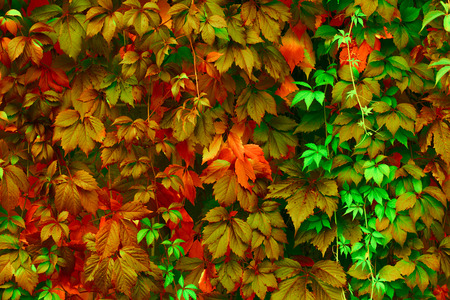 Photo for Natural background: leaves of bright colors - Royalty Free Image