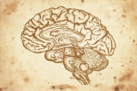Photo pour cursory drawing brain on old paper background - image libre de droit