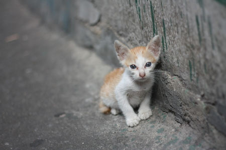 Photo pour poor alone white orange kitty cat without mom standing beside the dirty wall near by canal. - image libre de droit