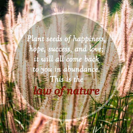 Photo for Meaningful quotes on grass flowers in meadow under sunlight, Plant seeds of happiness, hope, success, and love; it will all come back to you in abundance. This is the law of nature. - Royalty Free Image