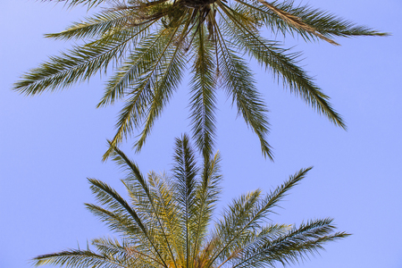 Palm trees against the blue sky. Concept tropic, vacation and travel. Bottom view.