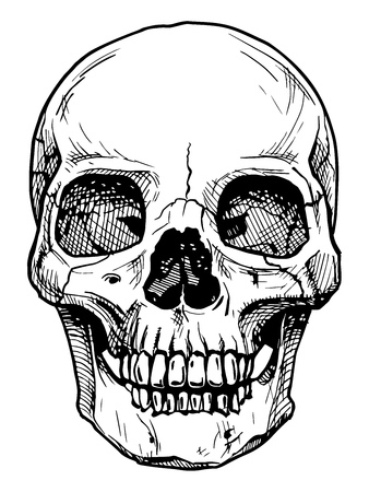 Illustration pour Vector black and white illustration of  human skull with a lower jaw in ink hand drawn style. - image libre de droit