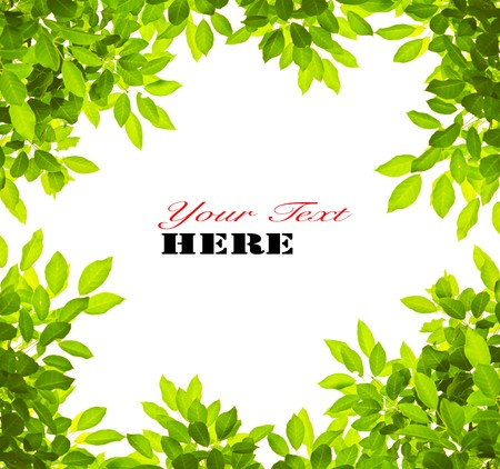 Green leave on white background