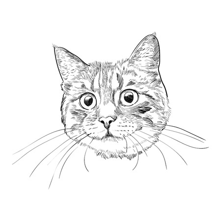 Illustrazione per Cute kitty head hand drawn sketch. Cat face with long whiskers isolated on white background. - Immagini Royalty Free