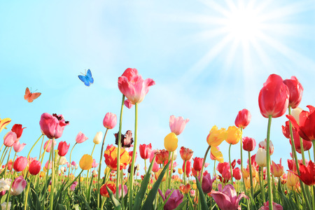 Foto de bright sunny day in may with tulip field in various colors - Imagen libre de derechos