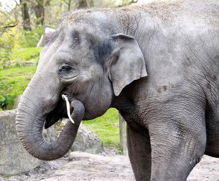 Photo pour elephant background. - image libre de droit