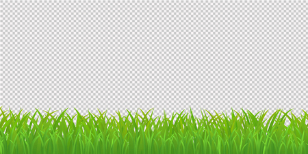 Illustration pour Green Grass Border, Isolated on Transparent Background. Vector Illustration - image libre de droit