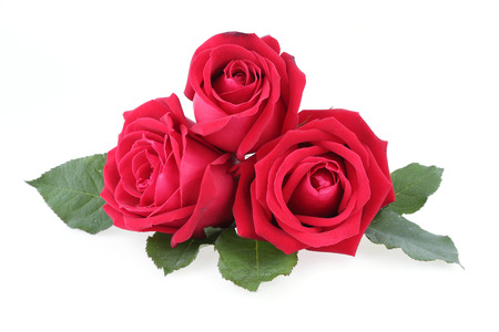 Photo pour red rose isolated on white background - image libre de droit