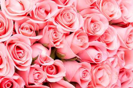 Photo pour pink rose flower bouquet background - image libre de droit