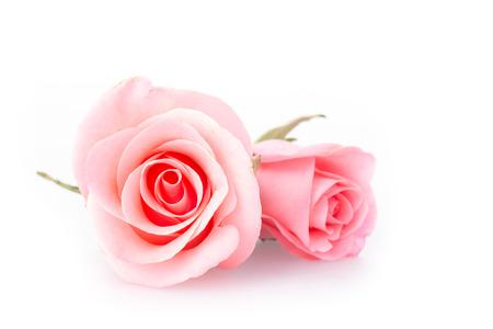 Foto de pink rose flower on white background - Imagen libre de derechos