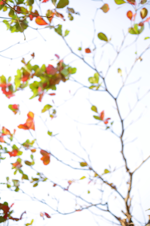 Photo for abstract blur autumn background, leaf falling on branch tree - Royalty Free Image