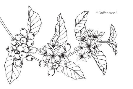 Illustration pour Coffee tree. Drawing and sketch with black and white line-art. - image libre de droit