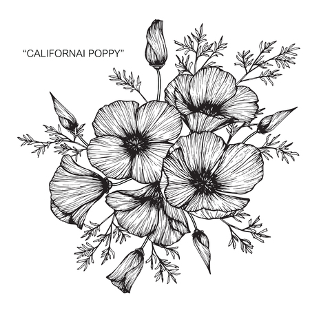 Illustration for California poppy flower drawing. - Royalty Free Image