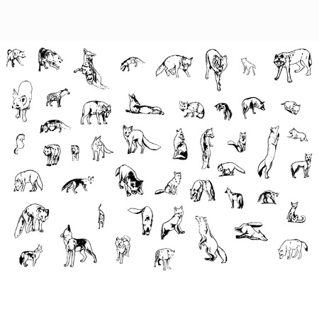 a set of foxes and wolfs in different poses