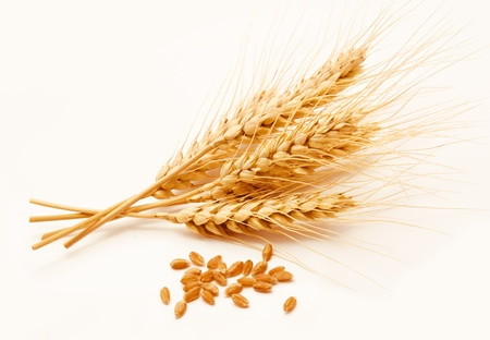 Foto de Wheat ears and seed isolated on a white background  - Imagen libre de derechos