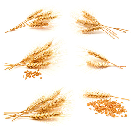 Foto de Collection of photos wheat ears and seed isolated on a white background - Imagen libre de derechos