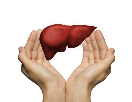 Photo pour A human liver between two palms of a woman on white isolated background. The concept of a healthy liver. - image libre de droit