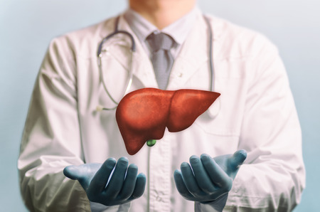 Foto de Image of a doctor in a white coat and liver above his hands. Concept of healthy liver and donation. - Imagen libre de derechos