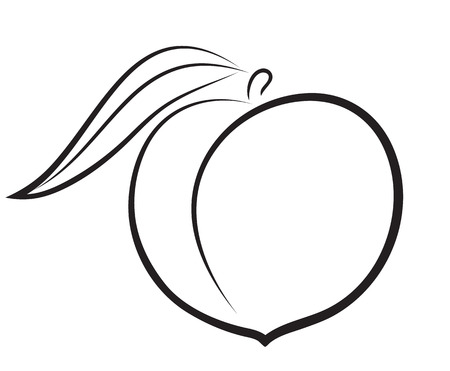 Photo for Artistic outline sketch of peach  Vector illustration - Royalty Free Image