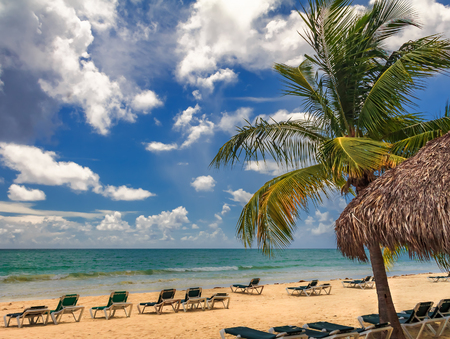 Foto de Beach chairs by the turquoise water of the Caribbean sea on a tropical beach with a palm tree in the foreground in Freeport, Bahamas - Imagen libre de derechos