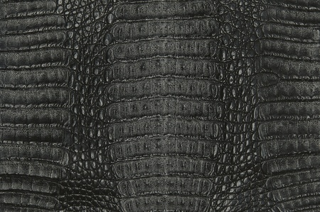 crocodile skin texture background