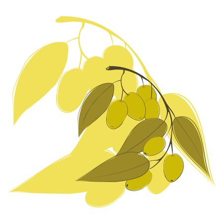 Hand drawing olive branch. Vector illustration, Logo, sign, advertising olives, olive oil for labels, food sketch packaging design