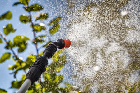 Foto de Spraying the leaves of trees against pests with chemicals. - Imagen libre de derechos