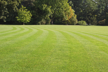 Foto de green, striped lawn in the park - Imagen libre de derechos